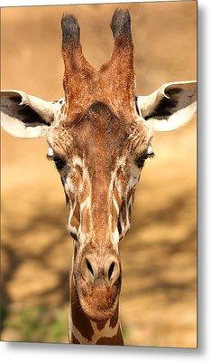 Metal Print featuring the photograph Giraffe by Elizabeth Budd