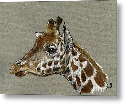 Giraffe Head Study Metal Print by Juan  Bosco