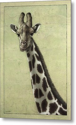 Giraffe Metal Print by James W Johnson