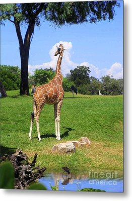 Metal Print featuring the photograph Giraffe On A Spring Day by Jeanne Forsythe