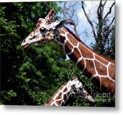 Metal Print featuring the photograph Giraffes Coming And Going by Tom Brickhouse