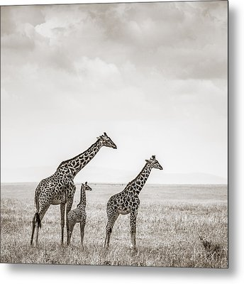 Giraffes Masai Mara Kenya Metal Print by Regina Mueller