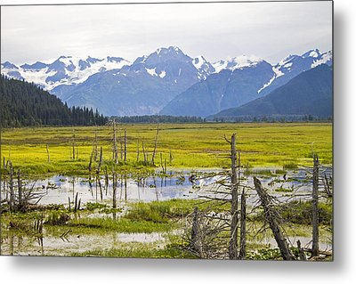 Girdwood Sunken Trees 2 Metal Print by Saya Studios