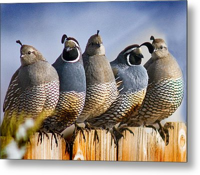 Girl Boy Girl Boy Girl Metal Print by Janis Knight