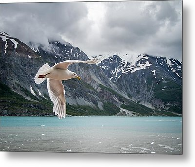 Glacier Bay Flyby Metal Print by Randy Turnbow