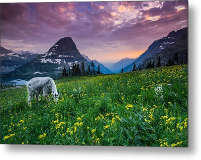 Glacier National Park 4 Metal Print by Larry Marshall