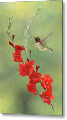 Glad Hummingbird Metal Print