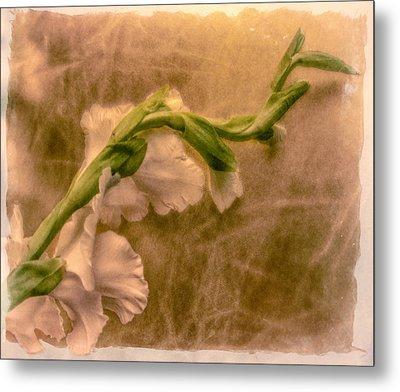 Gladiola Metal Print by Jill Balsam