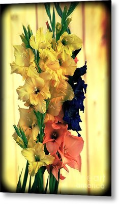 Metal Print featuring the photograph Gladiolus  2013 by Marjorie Imbeau