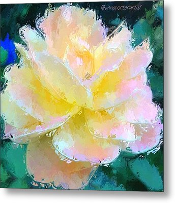 Glazed Pale Pink And Yellow Rose  Metal Print by Anna Porter
