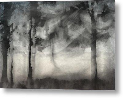 Glimpse Of Coastal Pines Metal Print by Carol Leigh