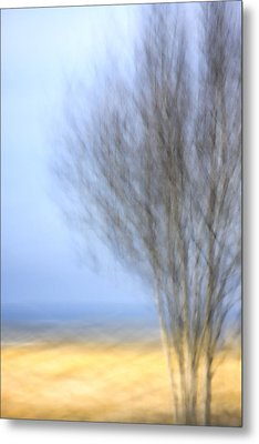 Glimpse Of Trees Sand And Beach Metal Print by Carol Leigh
