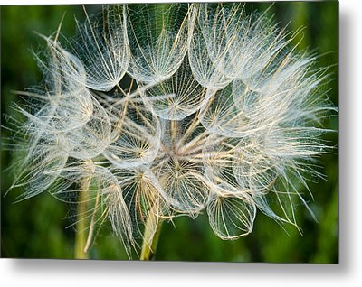 Glittering In The Grass Metal Print by Cara Moulds