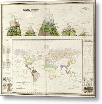 Global Botanical Geography Metal Print