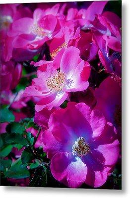 Glorious Blooms Metal Print