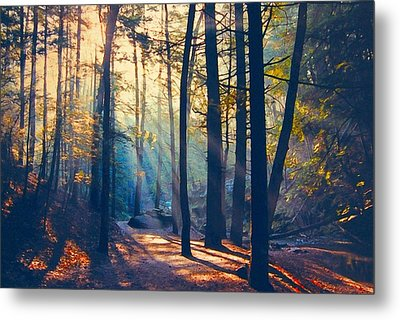 Glorious Forest Morning Metal Print