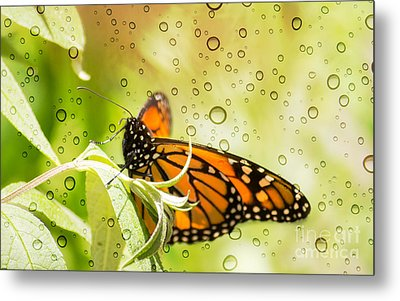 Glorious Monarch 3 Metal Print