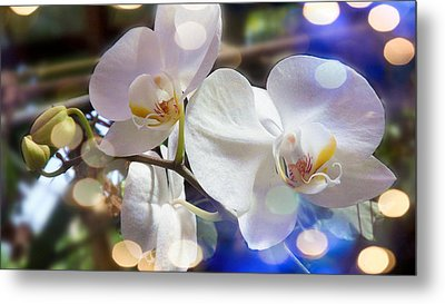 Glorious Orchids Metal Print