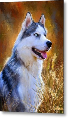 Glorious Pride - Siberian Husky Portrait Metal Print by Lourry Legarde