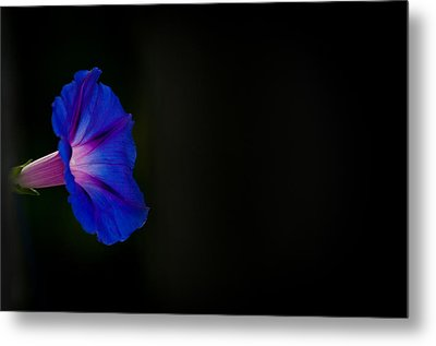 Metal Print featuring the photograph Glorious Simplicity by Cheryl Baxter