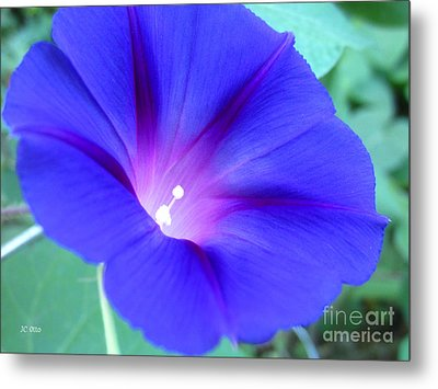 Glory Of The Morning 1 Metal Print