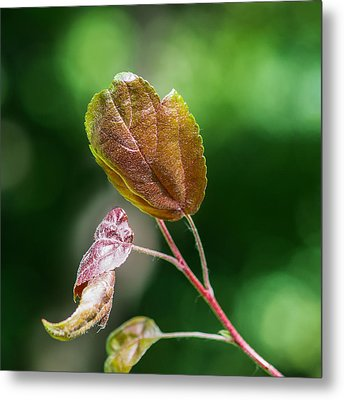 Glossy Nature - Featured 3 Metal Print by Alexander Senin