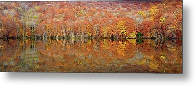 Glowing Autumn Metal Print by Sho Shibata