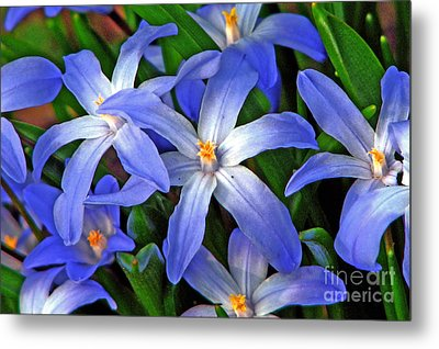 Glowing Blue Metal Print by Chris Anderson
