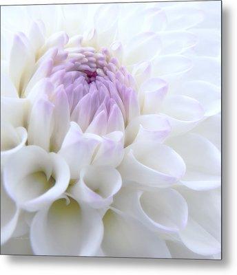 Glowing Dahlia Flower Metal Print by Jennie Marie Schell