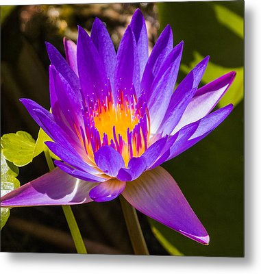 Glowing From Within Metal Print