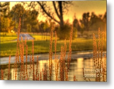 Metal Print featuring the photograph Glowing Plants In A Pond by Jim Lepard
