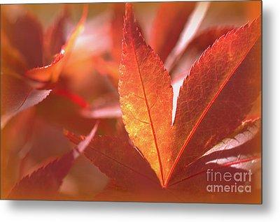 Glowing Red Leaves Metal Print