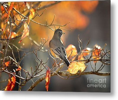 Glowing Robin 2 Metal Print