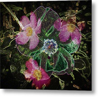 Glowing Wild Rose Metal Print by Penny Lisowski
