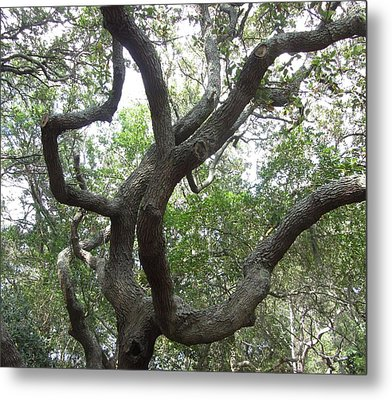 Metal Print featuring the photograph Gnarled Tree by Cathy Lindsey