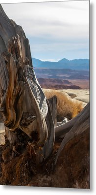 Gnarly Desert Cypress In Utah Metal Print by Michael Flood