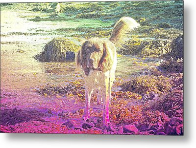 One Day Wil Will Go Hunting For Something Valuable  Metal Print by Hilde Widerberg