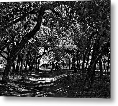 Go Toward The Light Metal Print by Bob and Nadine Johnston