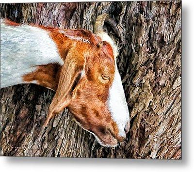 Metal Print featuring the photograph Goat 3 by Dawn Eshelman