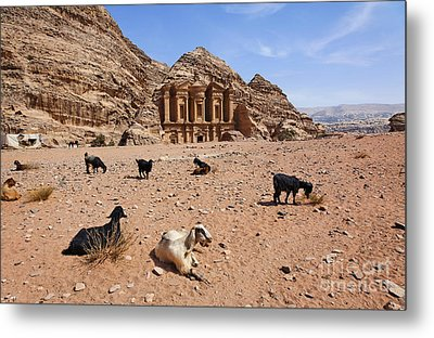 Goats In Front Of The Monastery At Petra In Jordan Metal Print by Robert Preston