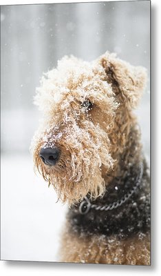 Dog's Portrait Under The Snow Metal Print