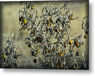 Metal Print featuring the photograph Gold And Gray - Silver Nightshade by Nadalyn Larsen