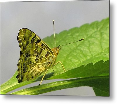 Gold And Green  Metal Print by Jennifer Wheatley Wolf
