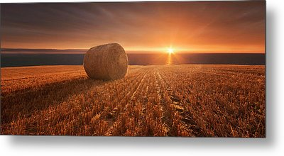 Gold Harvest Metal Print