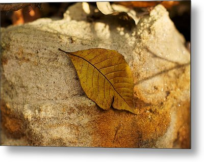 Metal Print featuring the photograph Gold Leaf by Jane Eleanor Nicholas