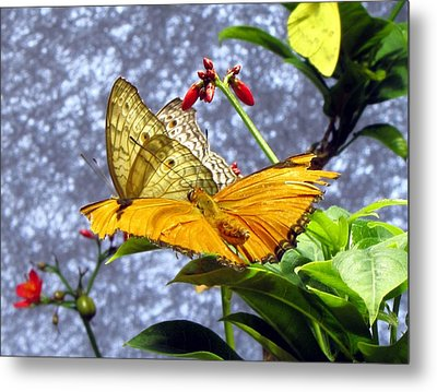 Gold On Gold Metal Print by Jennifer Wheatley Wolf