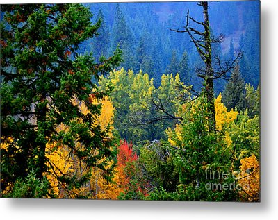 Gold Zen Metal Print by Greg Patzer