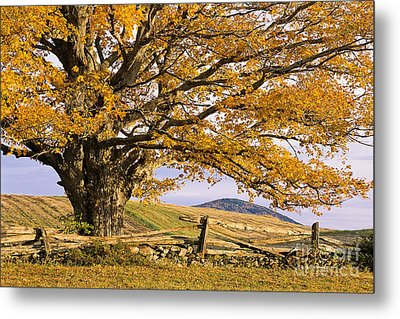 Golden Autumn Metal Print by Alan L Graham