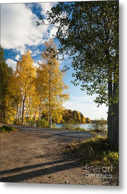 Golden Autumn Birches Metal Print