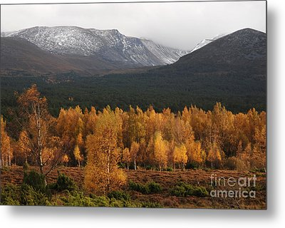 Golden Autumn - Cairngorm Mountains Metal Print by Phil Banks